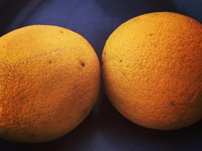 Die Cellulite